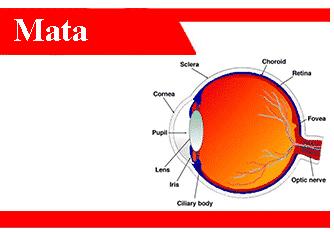 Bagian-bagian-mata-definisi-fungsi-cara-kerjanya-penyakit