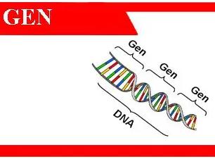 Gen-adalah-fungsi-sifat-struktur-ekspresi-lokasi-teori