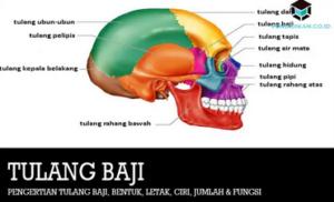 tulang-baji